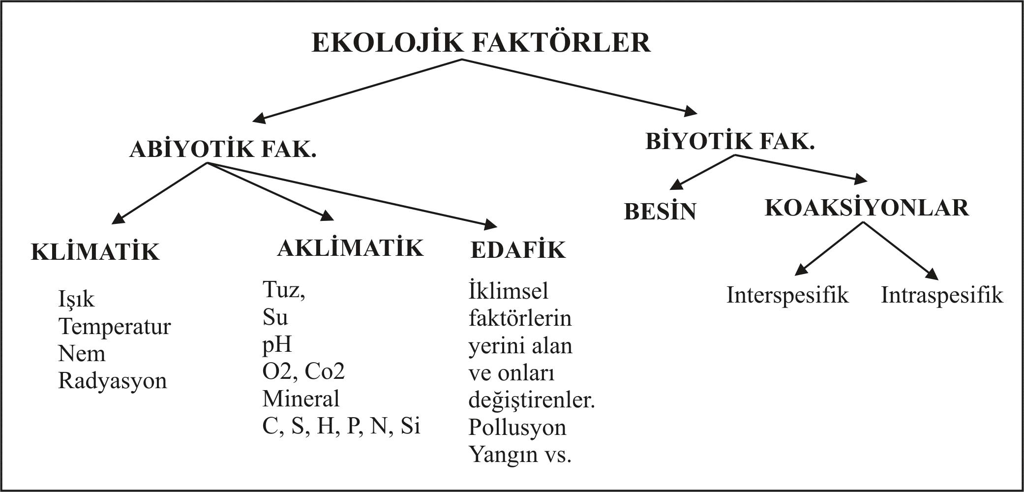 Ekolojik faktörler ve organizmalar üzerindeki etkisi